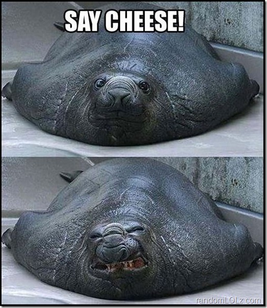 Beautiful Smile - Say Cheese