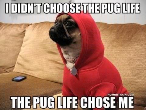 Life Is Ruff Dog Meme