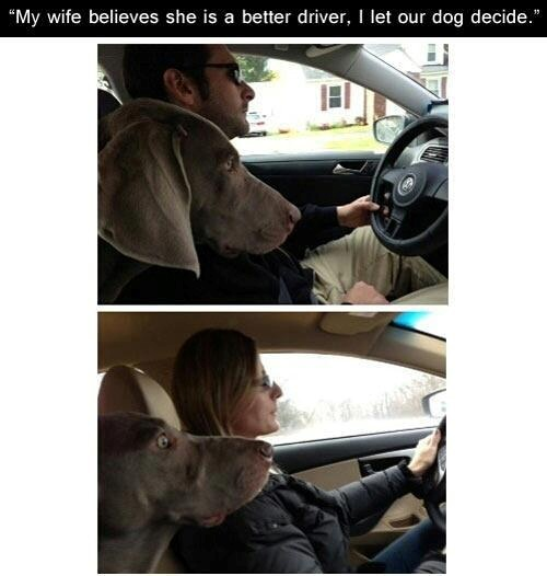 My Wife is a Better Driver