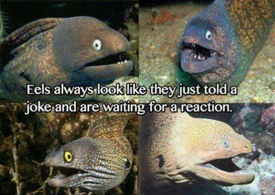 Eel joke reaction face