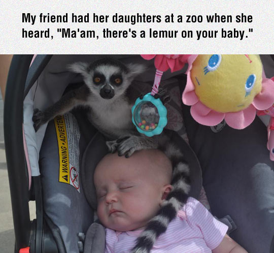 Baby-Made-A-Friend-At-The-Zoo
