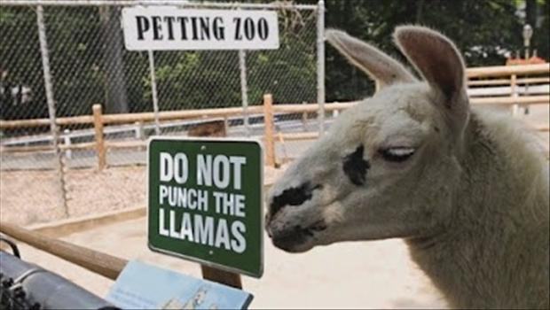 do-not-punch-the-llamas-funny-zoo-signs