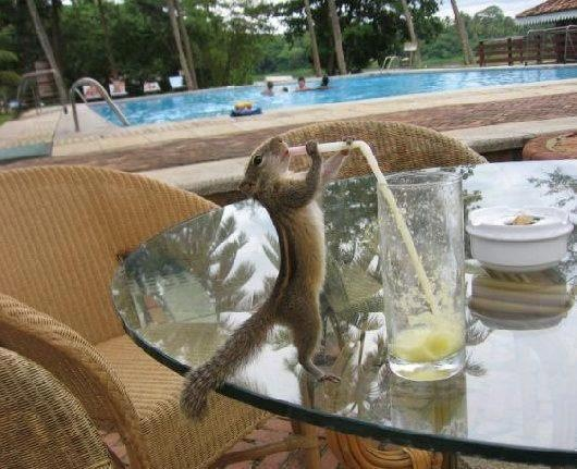 How Cute - The Squirrel is Thirsty